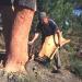 Arbore de pluta