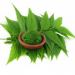 Pulbere de neem