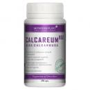 Calcareum